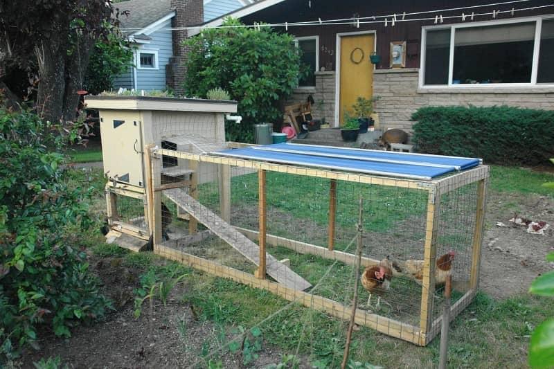 Как построить летний курятник на даче своими руками 722
