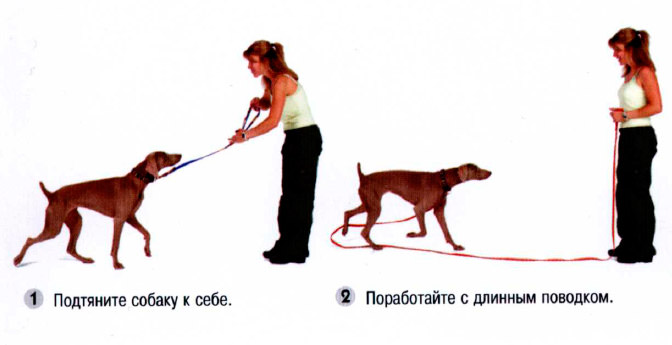 Как дрессировать маленькую собаку в домашних условиях