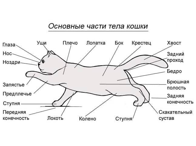 Строение животного в картинках