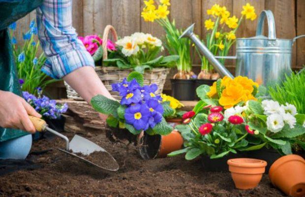 Какие цветы сажать в августе на следующий год 809
