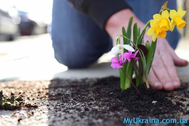 32dad1d6abcb8e Каталог Інтерфлора на весну 2018 року в Україні | Поради